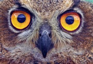 """Keep your """"owl"""" eyes on the functions you need in a pedometer."""
