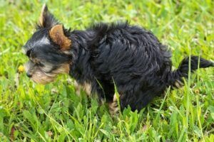 Dog walking has its downsides - poop time!